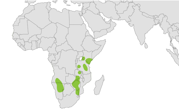 Map of Black Rhino Habitat