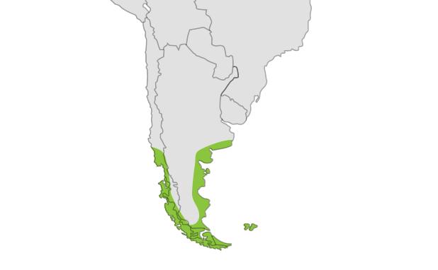 Magellanic Penguin location map
