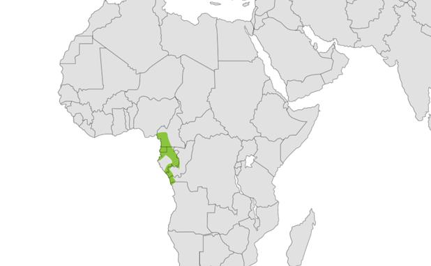 Mandrill location map
