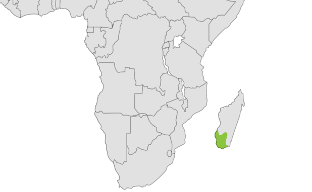 Ring Tailed Lemur location map