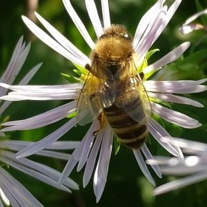 Public Conservation Talk: Michigan Birds & Bees