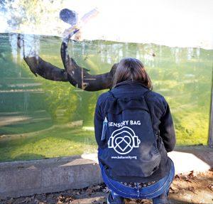 Woman wearing a sensory bag watching otters swim
