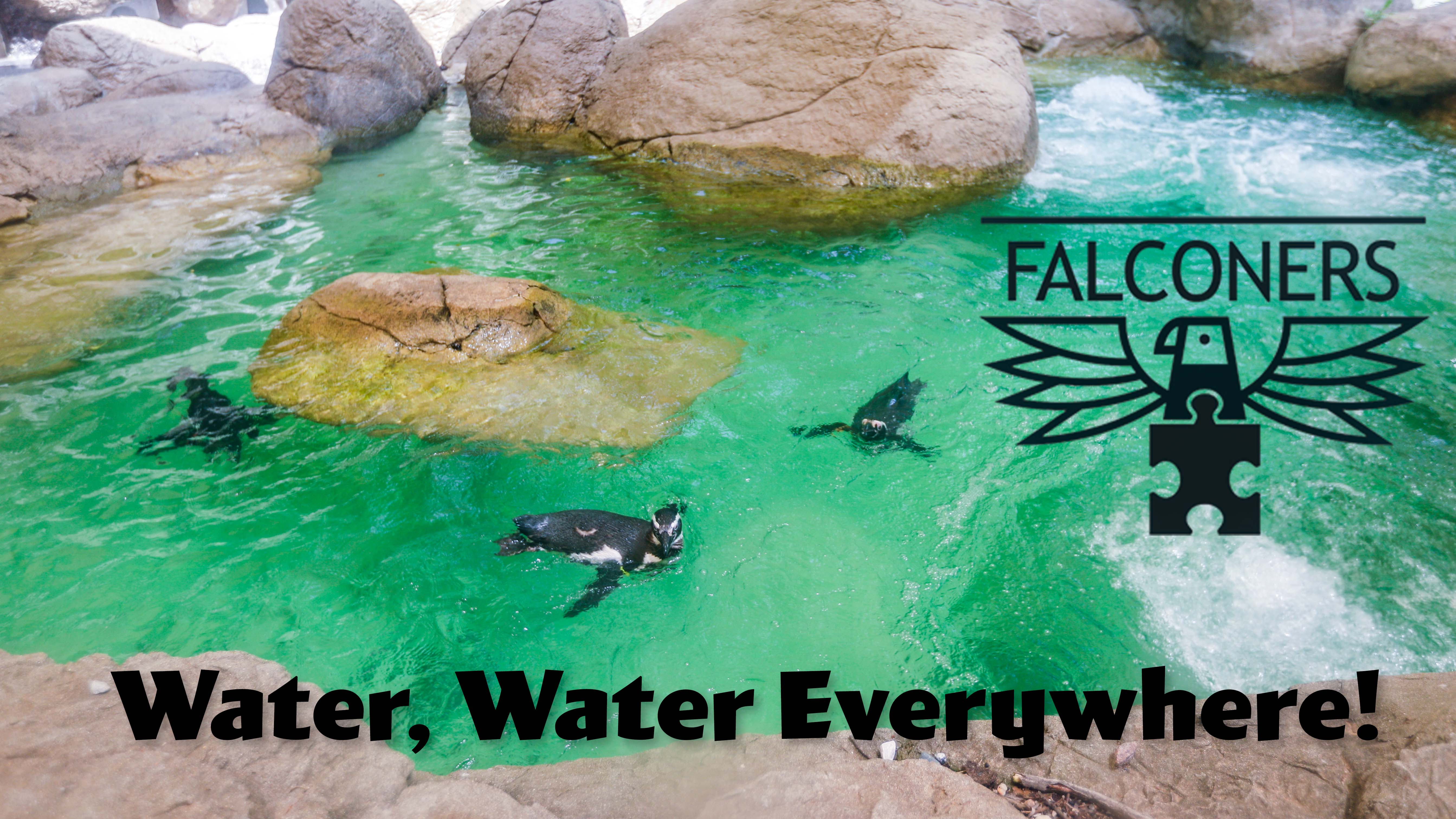 Falconers - Water, Water Everywhere banner